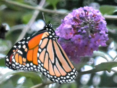 A butterfly in Woodstock, New York. Groovy ah-h-h.
