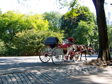 They have horse-drawn carriages where I'm going but with much less space to cover and less people that take a ride.