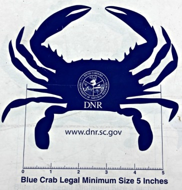 How to legally measure a crab.