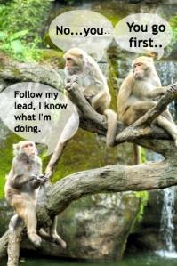 Monkey See Monkey Do