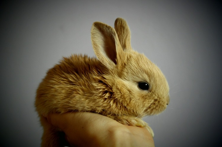 I put this bunny picture in here because it's so freaking cute. It makes me happy. Hope it affects you the same way.
